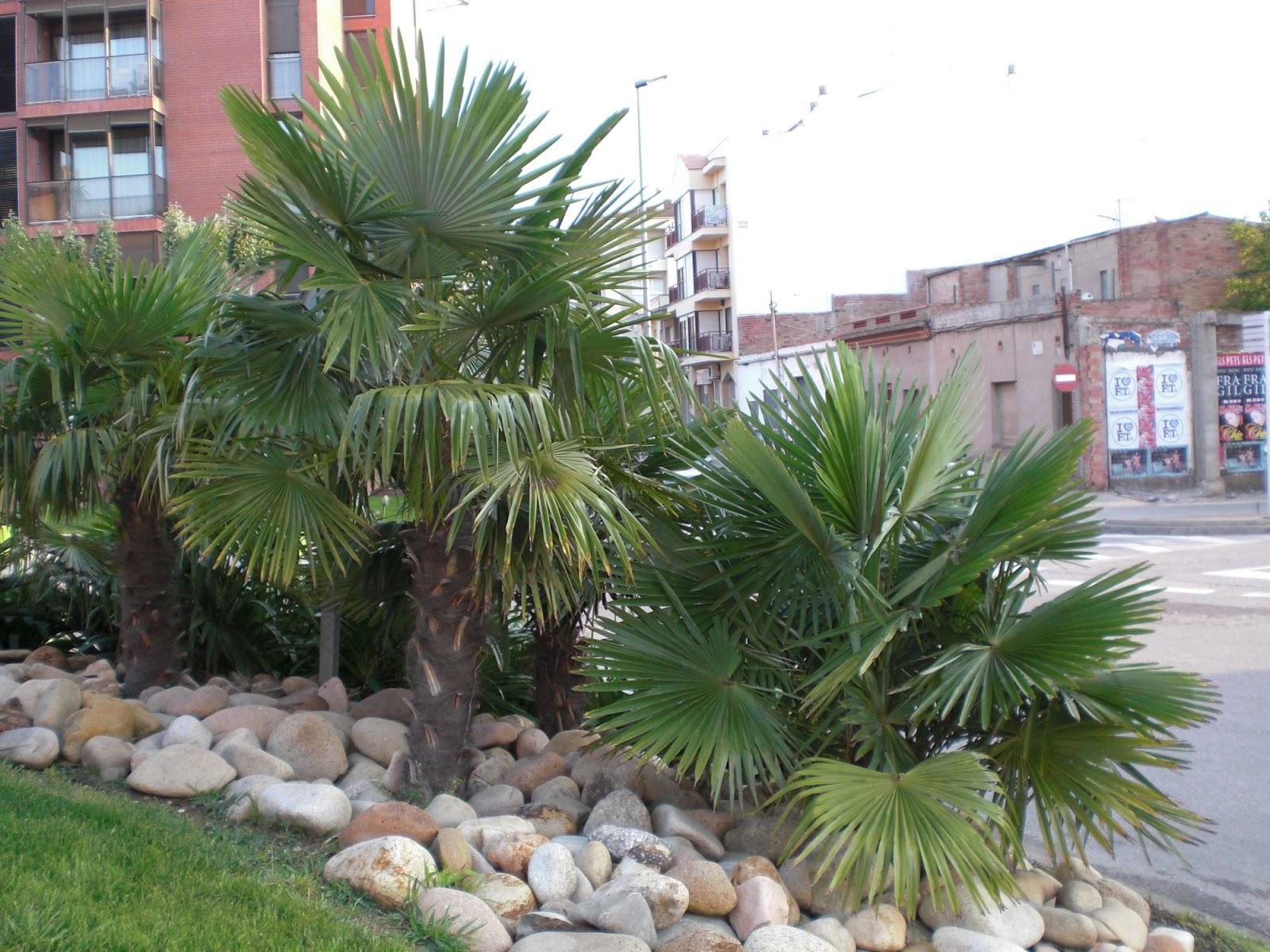 Palmeras de jardin imagui for Diseno jardines