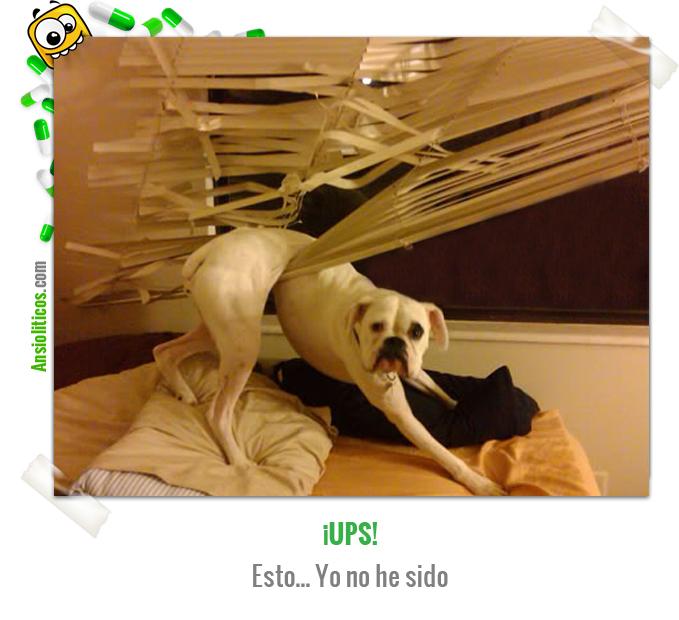 Chiste de Animales de un Accidente Canino