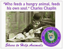 World Animal Foundation~