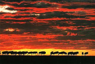 Антилопы-гну