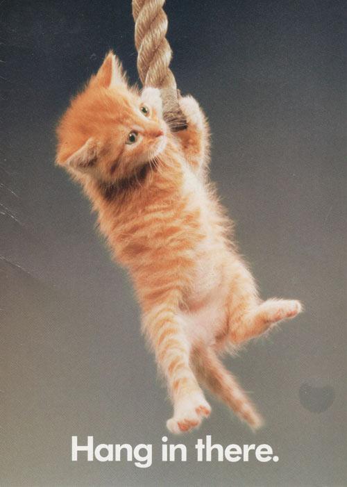 Hang in There Kitty Wallpaper Desktop HD
