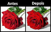 Rosa vermelha (rosa flor blog)
