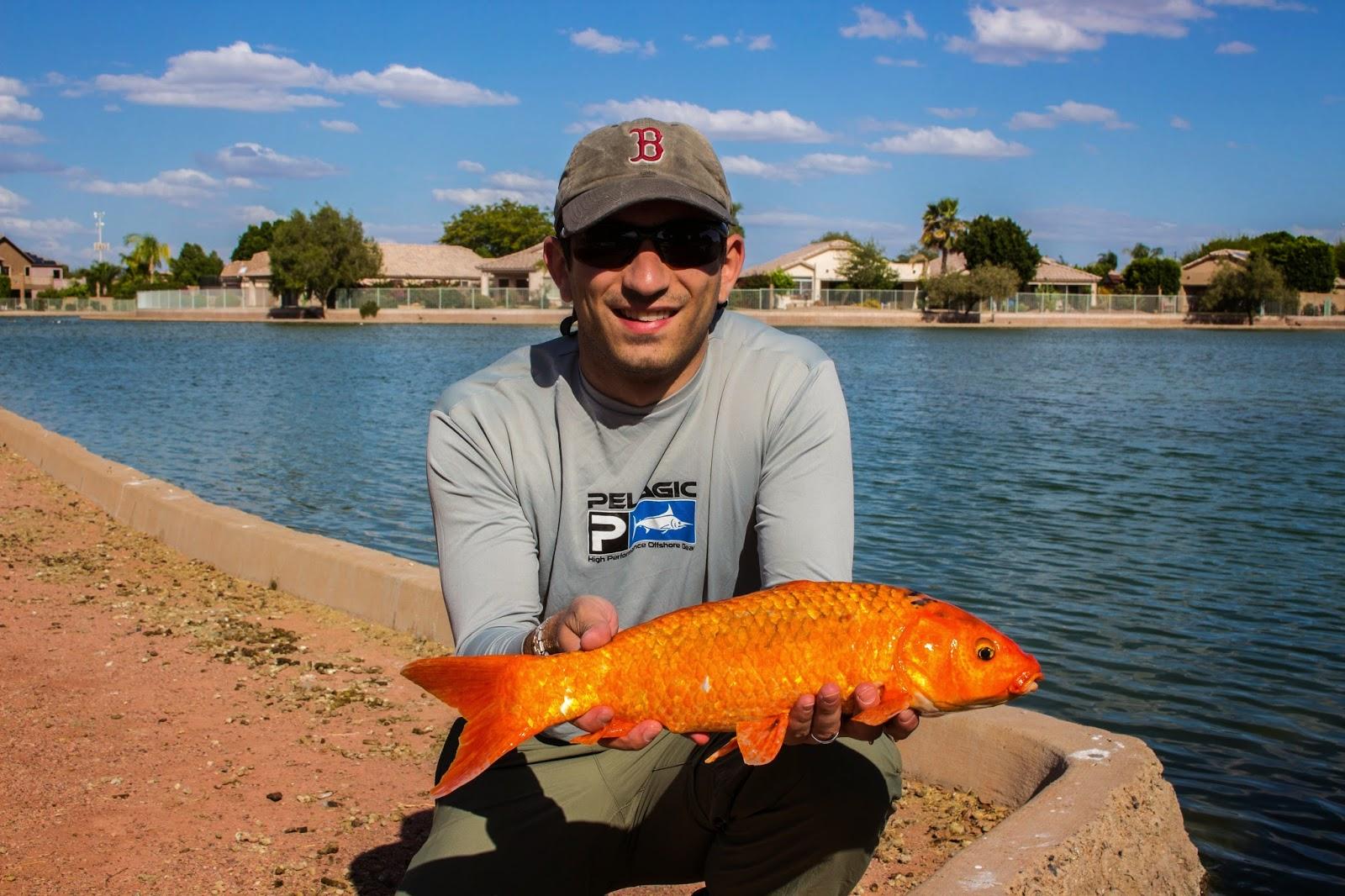 District carp phoenix carp fishing for Fishing in phoenix arizona