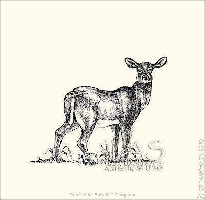 cerf de virginie femelle, chevreuil