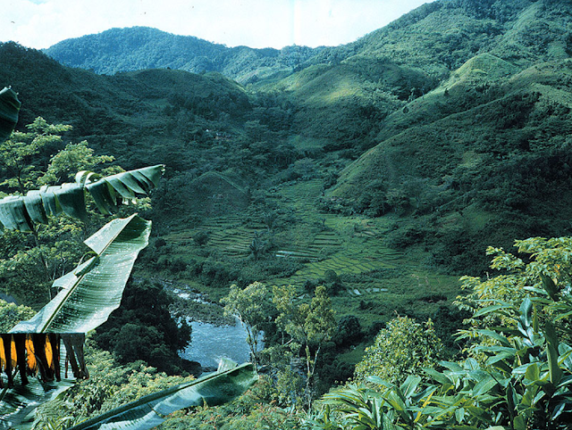 Ranomafana National Park- A World Heritage Site