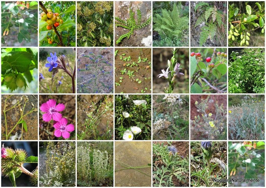 0000096a9 flora y fauna del ecuador por regiones naturales for Plantas ornamentales del ecuador