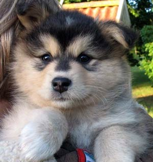 The Dog In World 6 New Dog Breeds 2011