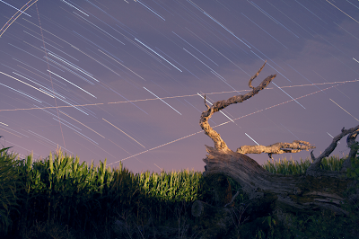 dead tree star trails