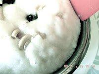 coconut steamed cakes
