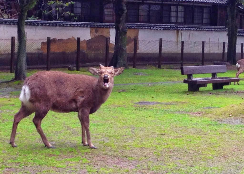 Funny animals of the week - 5 April 2014 (40 pics), deer yelling at cameraman