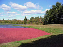 Cape Cod Cranberry Bog