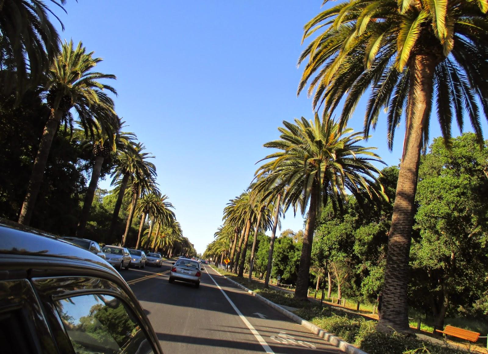 Stanford University Palm Drive