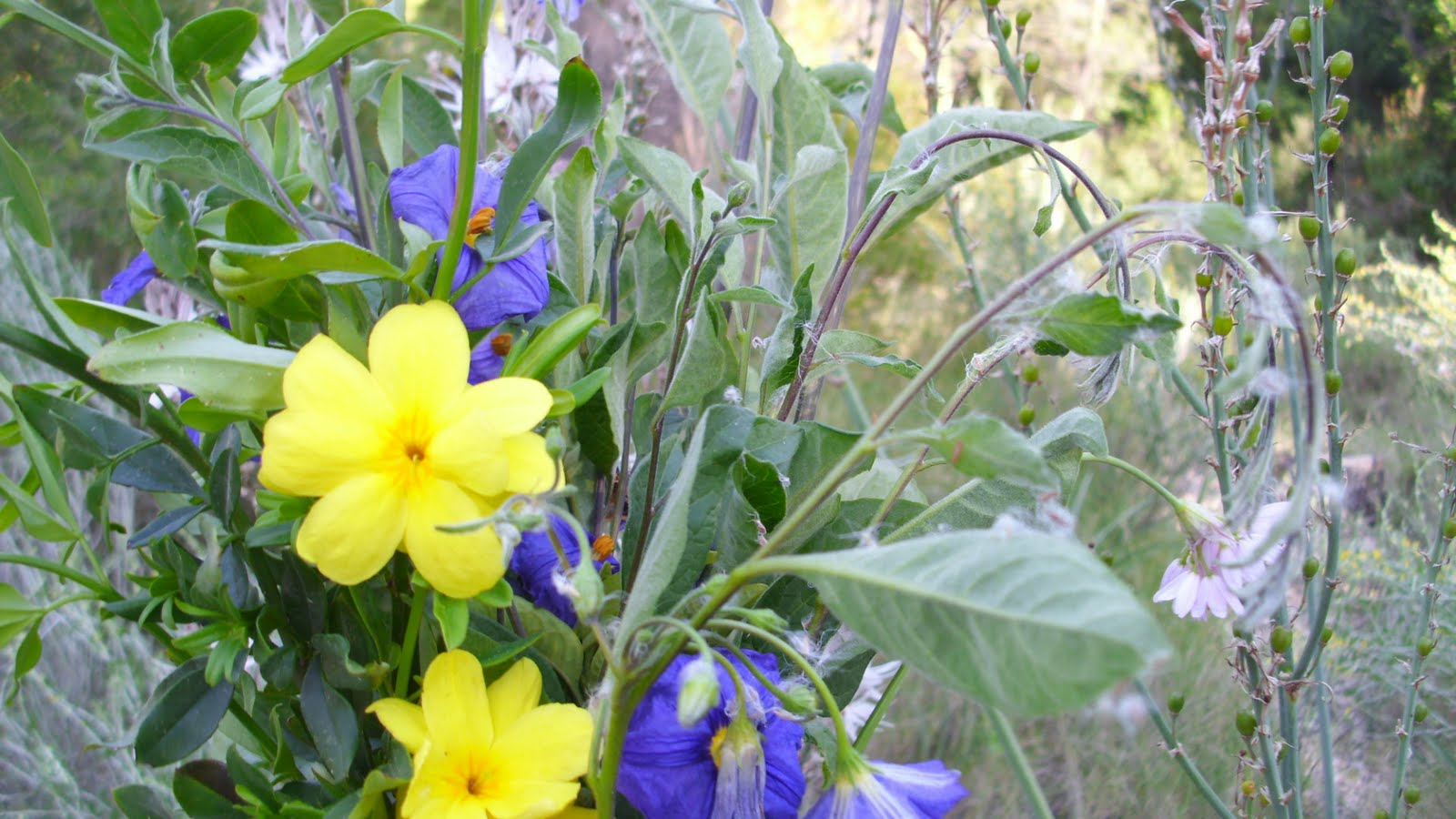 Flores salvajes!