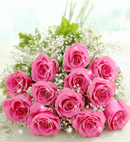 hoa hồng phấn