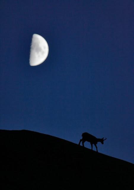 صور اطوار القمر , القمر صور