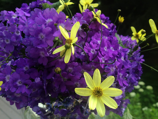 The Impatient Gardener's Garden Appreciation Society -- Superbena Violet Ice and Coreopsis 'Moonbeam'