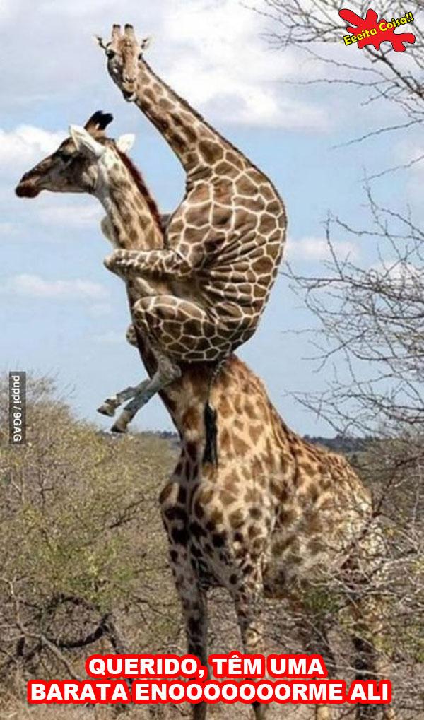 barata, girafa, montando, medo, eeeita coisa