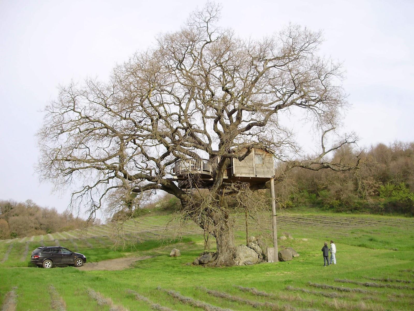 Quelli che parlano agli alberi a quante funzioni pu for Alberi simili alle querce