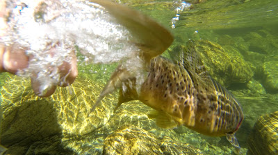 Frame of a GoPro clip of the airtime trout