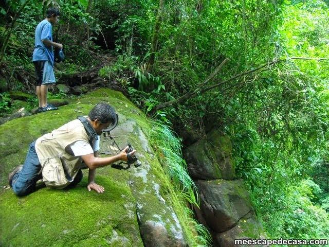 Cima de la cascada Vestido de la Novia, río Shilcayo (Checa y Dante )