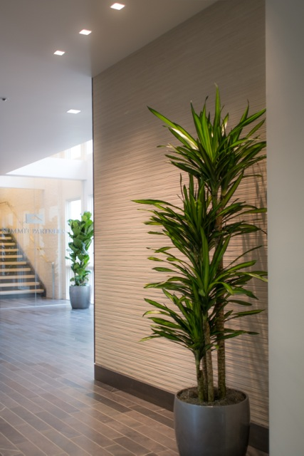 Everything Grows: Super sharp modern interior plant placement