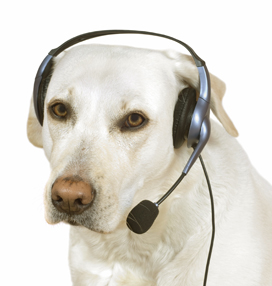 dog tech support. thank you for calling tech support! dog support d