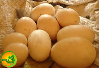 Ini telur ayam kampung jumlahnya 9 butir