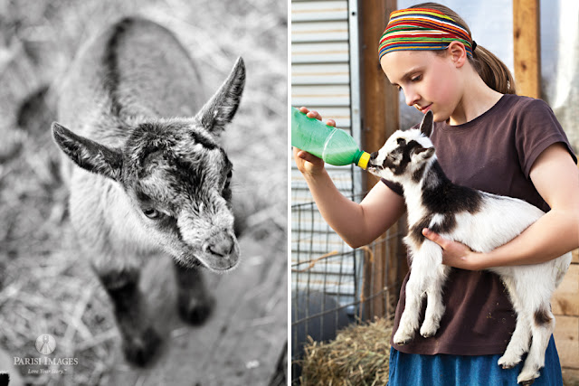 this beautiful life sarah parisi child_feeding_baby_goat_milk_kilpatrick_family_farms_new_york_photographer