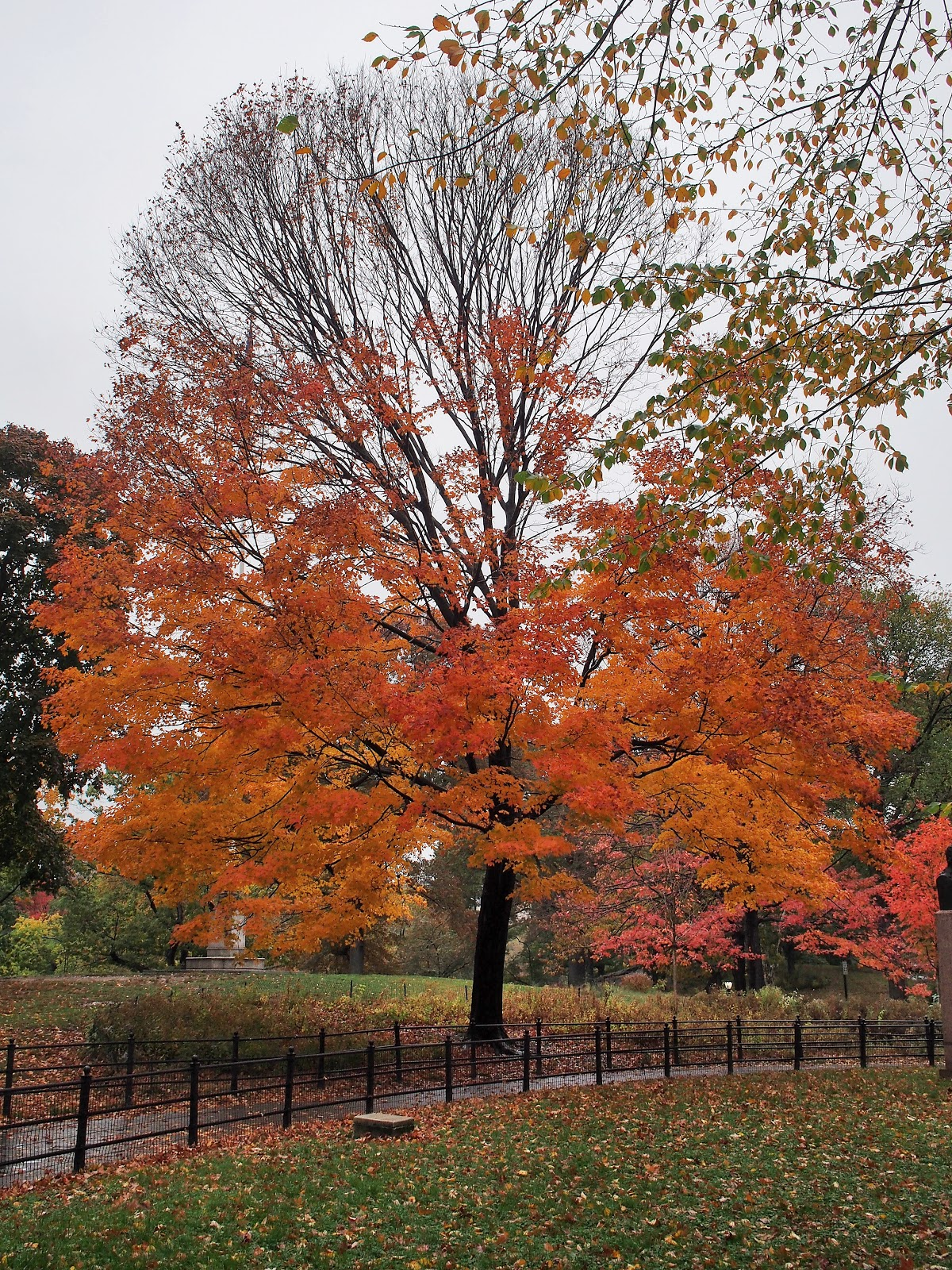 Orange, #orange #centralpark #NYC #fallincentralpark #fallinNYC 2014