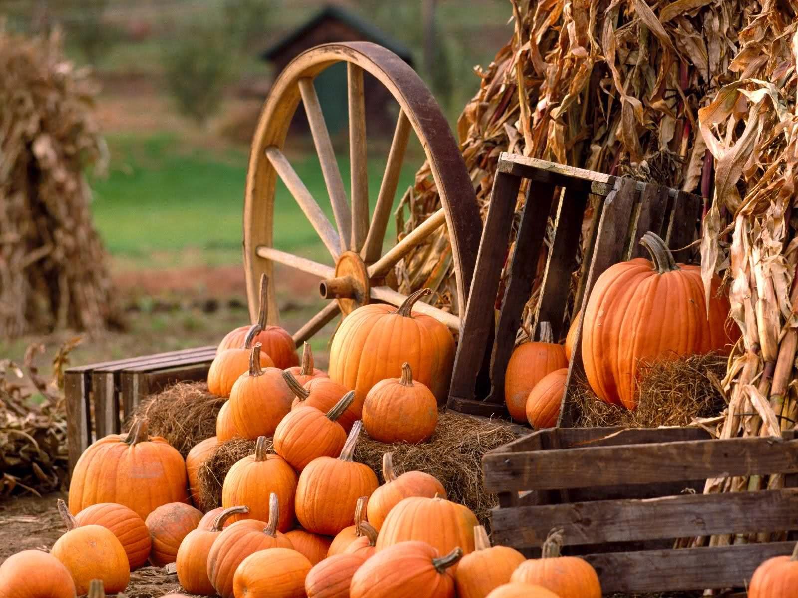 best fall autumn wallpaper pumpkin harvest