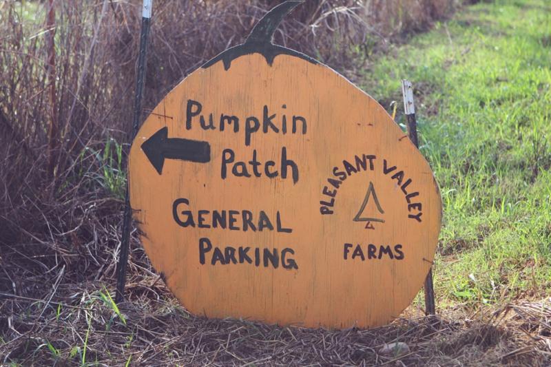 Pleasant Valley Farms Pumpkin Patch