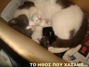 ...η Ζήνα με τα γατάκια της...