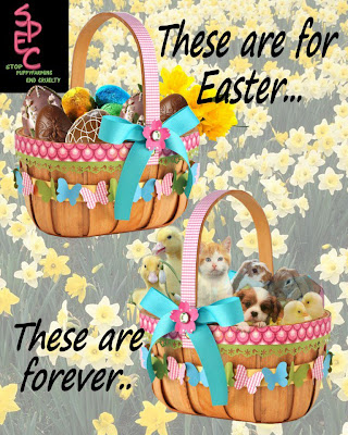 Pets are forever, eggs are for easter.