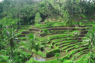 Pemandangan Sawah di Bali | Bulan Madu ke Bali bersama Enjoy Wisata