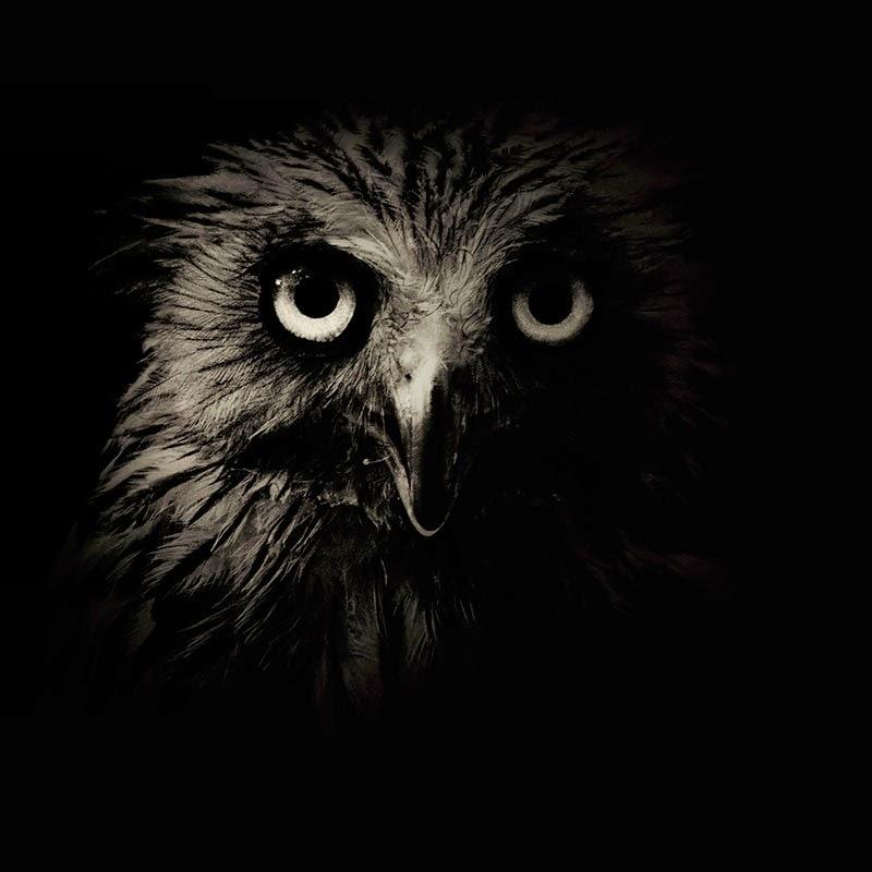 animales salvajes en blanco y negro de Alex Stephen Teuscher