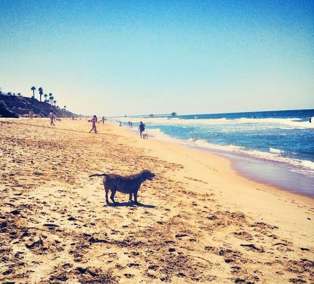 Huntington Beach Dog Park, Join the Gossip