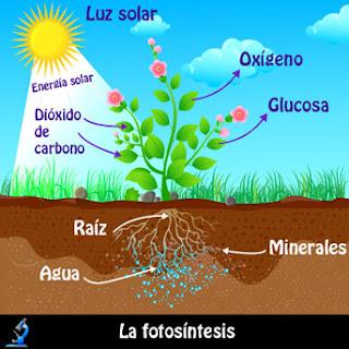http://www.guioteca.com/educacion-para-ninos/%C2%BFque-es-la-fotosintesis-sencilla-explicacion-para-entender-este-proceso/