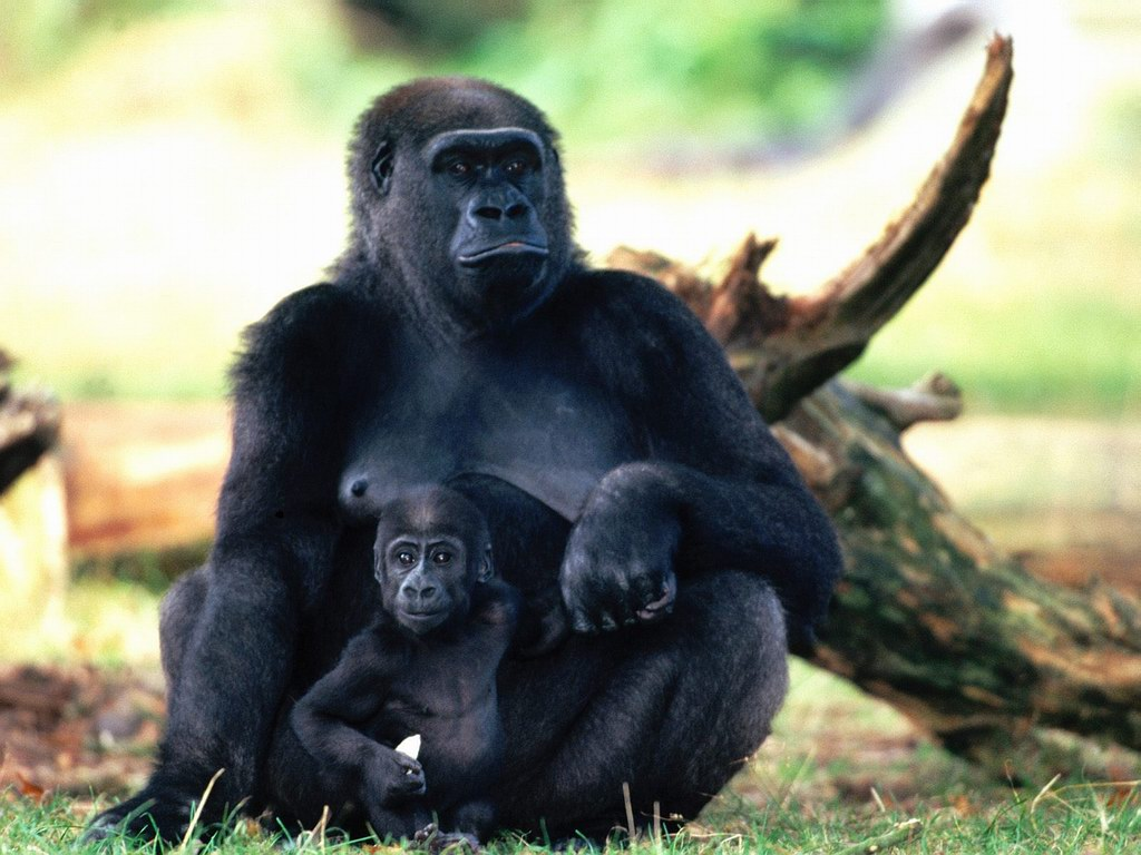ADKA Tours and Travel - Gorilla Safaris Uganda