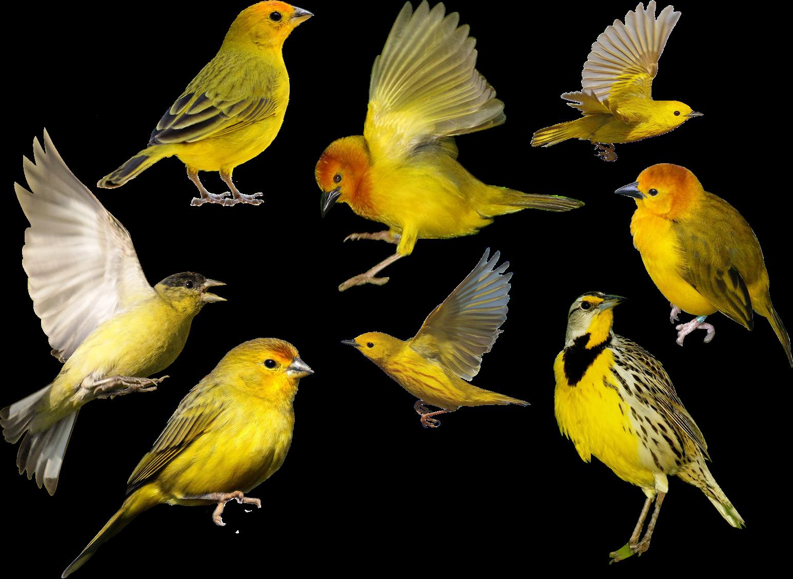 Aves png 4 4 taringa - Fuente para pajaros ...