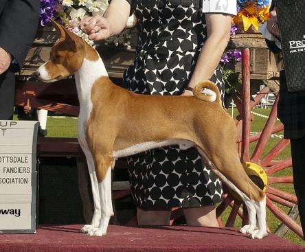 National Dog Show Basenji