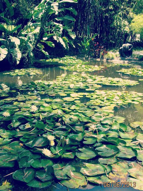Huntington Gardens- Lilypads
