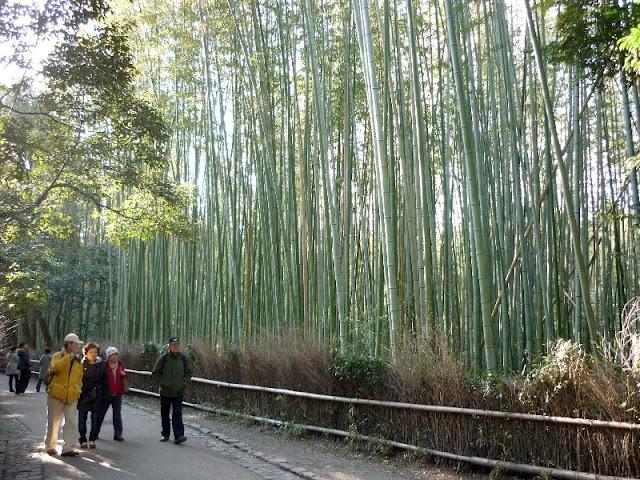 bosco di bambù, kyoto