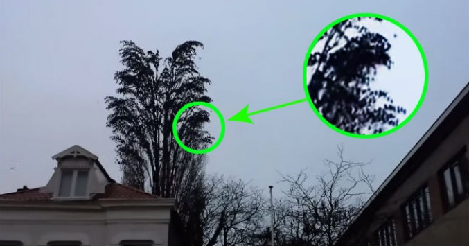 Βιντεοσκοπούσε τον ουρανό και έμεινε ΑΦΩΝΟΣ με αυτό που είδε στο δέντρο !!