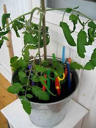 Tomatdekorationer