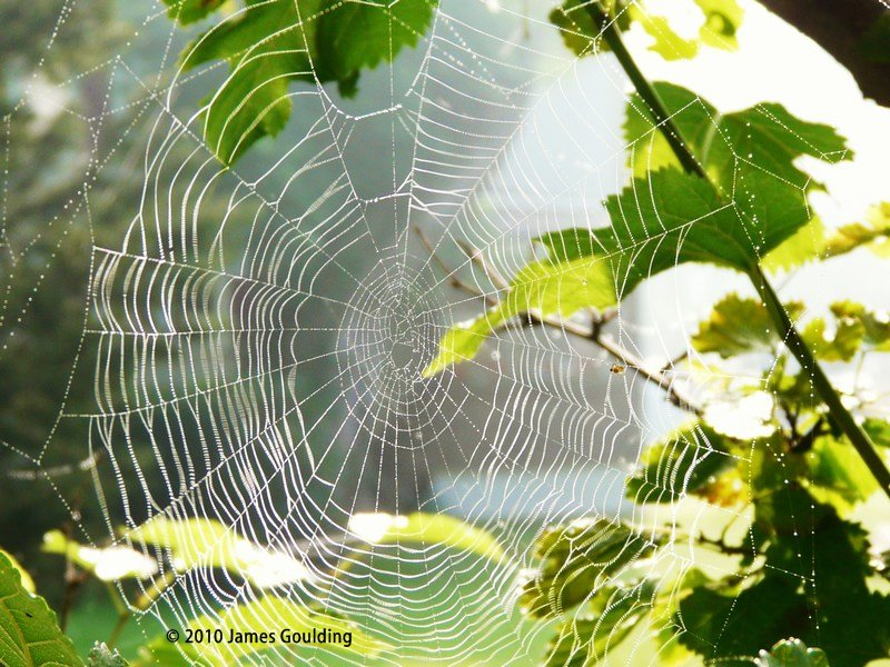 Spiders web D20a