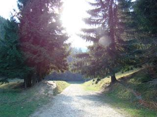 traseul pe drum forestier spre Canionul Sapte Scari