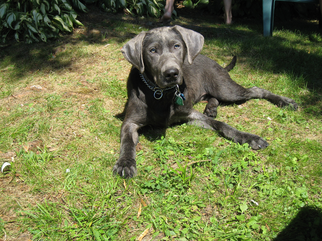 Musings of a Biologist and Dog Lover: Recessives and Inbreeding