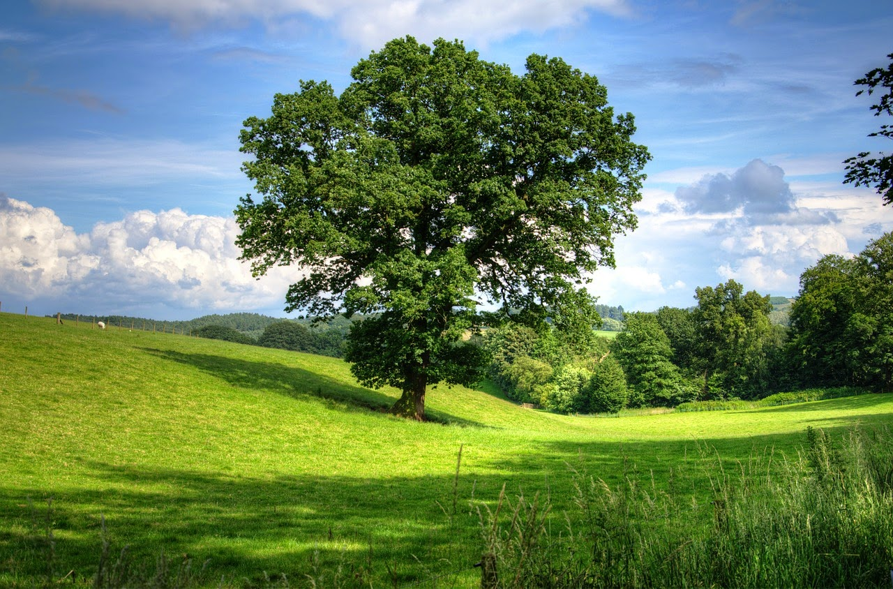 tree in meadow from pixabay