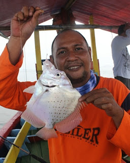 Bertemu Sicklefish Di Tanjung Priok