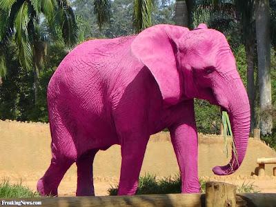 http://www.freakingnews.com/Pink-Elephant-Pics-82641.asp
